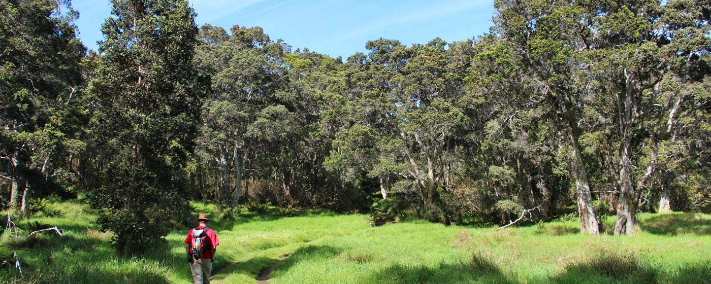 Meadow at Hakalau, photo by J.B. Friday