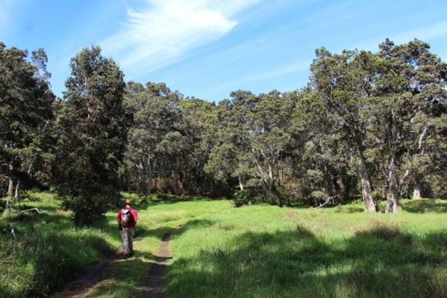 Meadow at Hakalau Forest, photo by J.B. Friday