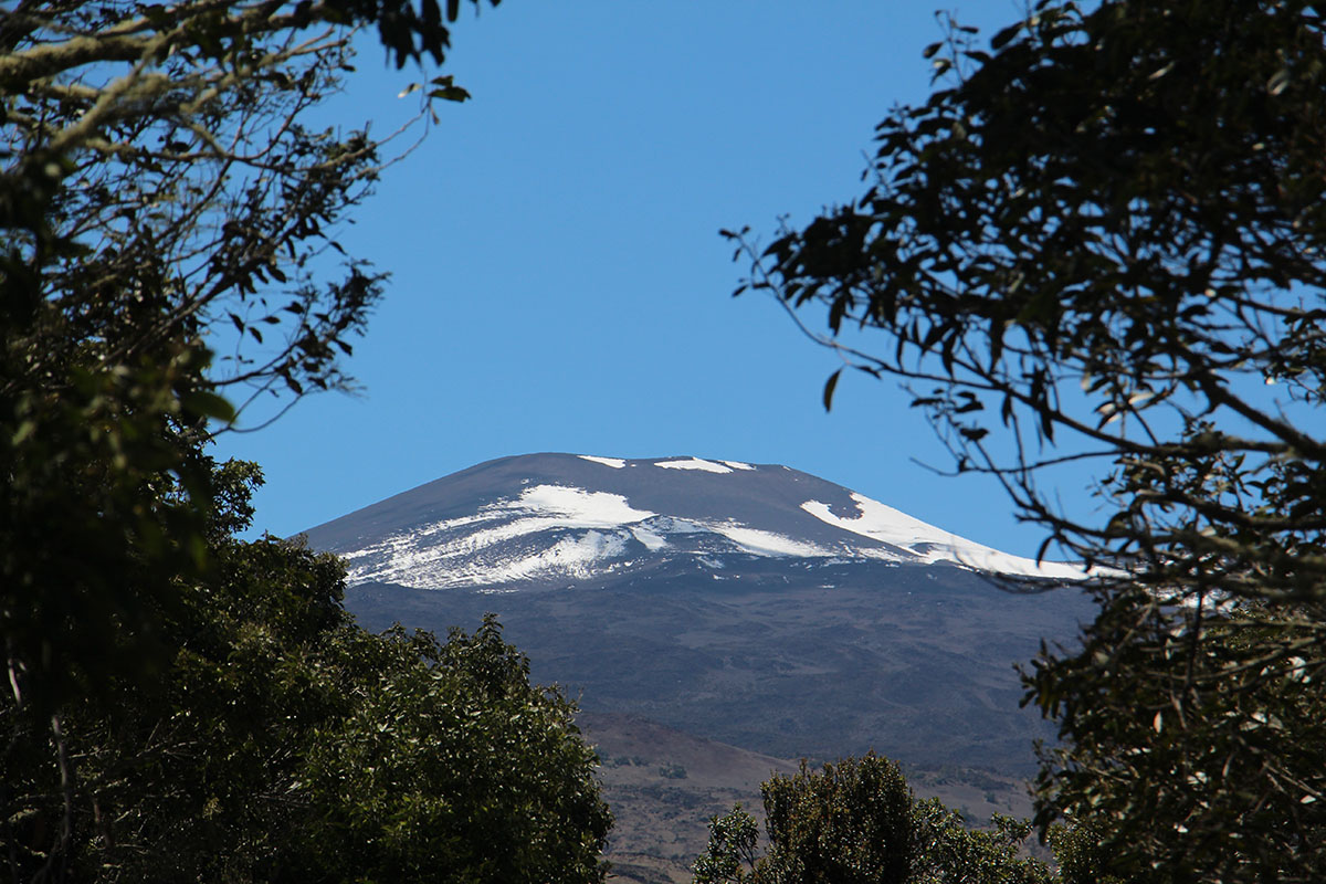 Snowy pu'u on Mauna Kea as seen from the Refuge. Photo by J. B. Friday