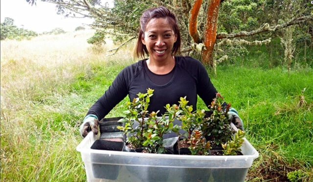 San carries a tray of outplantings. Photo by Dean Masutomi