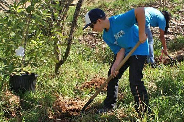 Youth planting a tree at Hakalau | Rare Plants Hawaii