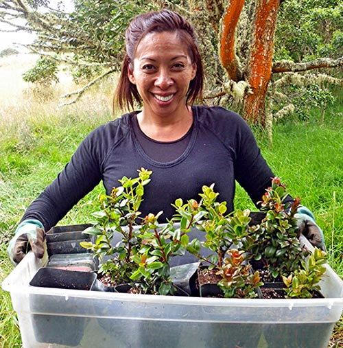 Volunteer Wildlife Refuge Hawaii. San carries a tray of outplantings. Photo by Dean Masutomi | Friends of Hakalau Forest